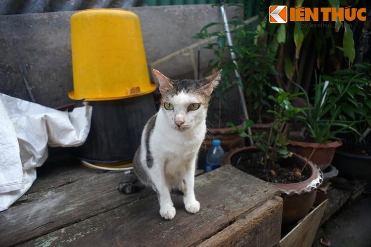 Kham pha the gioi thu vi cua loai meo o Bangkok-Hinh-20