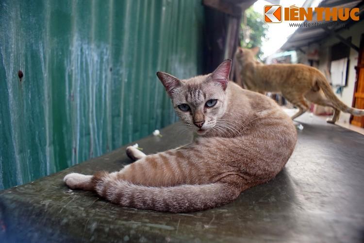 Kham pha the gioi thu vi cua loai meo o Bangkok-Hinh-24