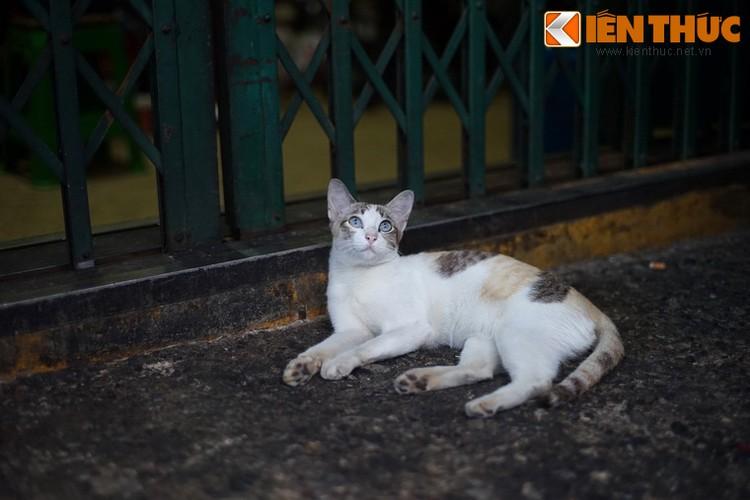 Kham pha the gioi thu vi cua loai meo o Bangkok-Hinh-25