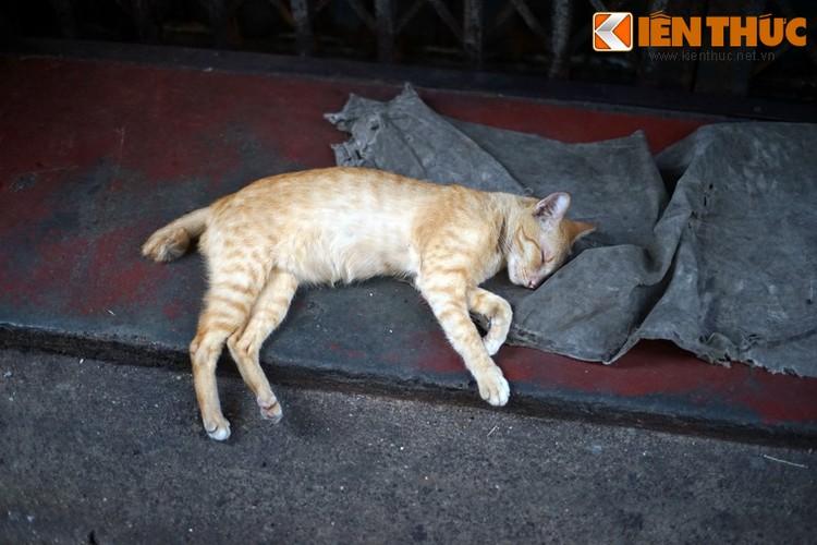 Kham pha the gioi thu vi cua loai meo o Bangkok-Hinh-27