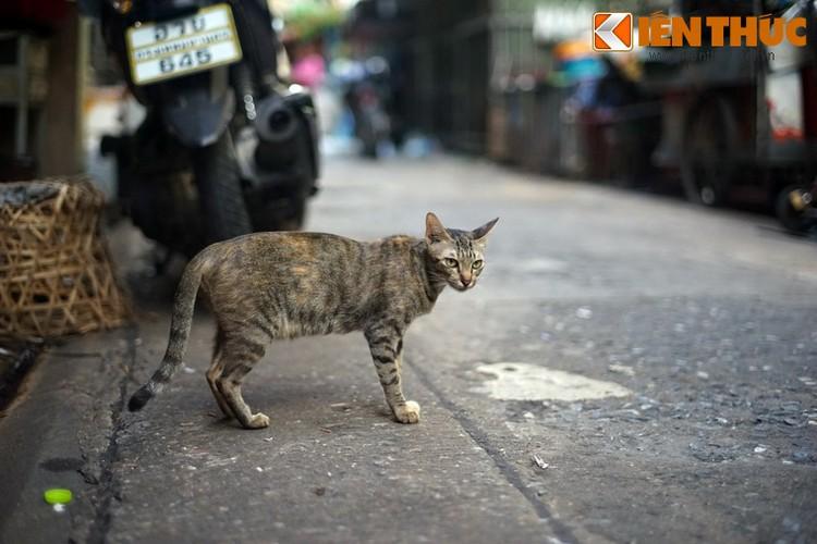 Kham pha the gioi thu vi cua loai meo o Bangkok-Hinh-28