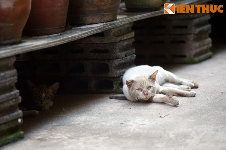 Kham pha the gioi thu vi cua loai meo o Bangkok-Hinh-30