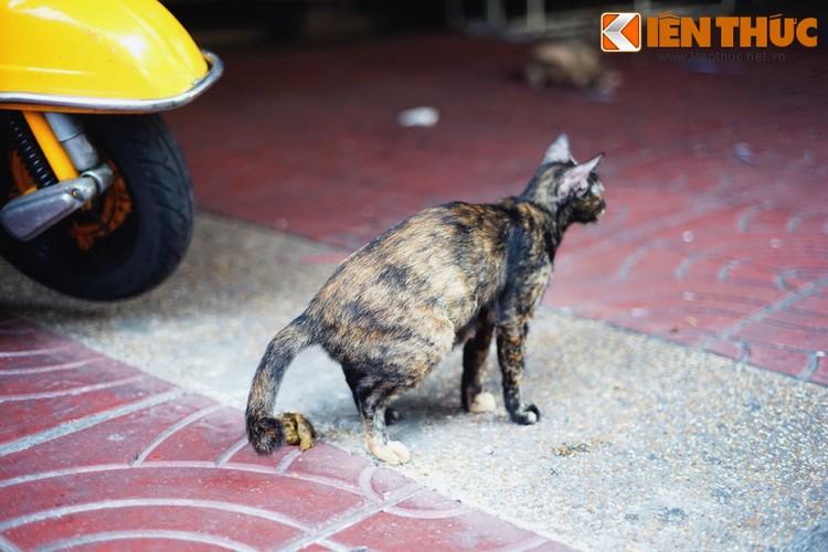 Kham pha the gioi thu vi cua loai meo o Bangkok-Hinh-34