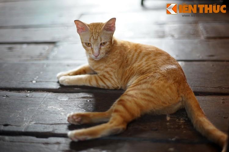 Kham pha the gioi thu vi cua loai meo o Bangkok-Hinh-4