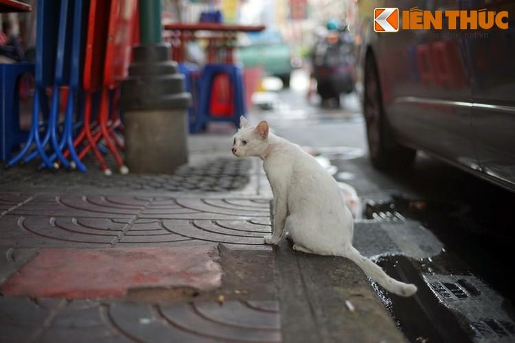 Kham pha the gioi thu vi cua loai meo o Bangkok-Hinh-6