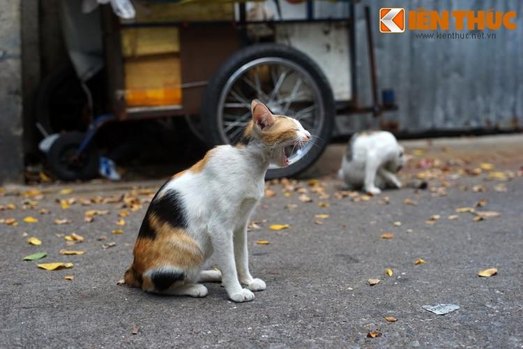 Kham pha the gioi thu vi cua loai meo o Bangkok-Hinh-7