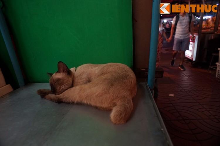 Kham pha the gioi thu vi cua loai meo o Bangkok-Hinh-8