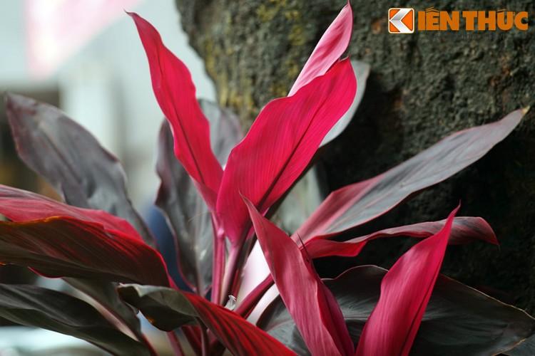 Loat cay, hoa canh do ruc dem lai may man cho ngay Tet-Hinh-10
