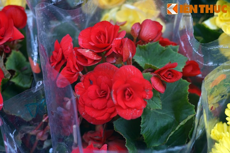 Loat cay, hoa canh do ruc dem lai may man cho ngay Tet-Hinh-11