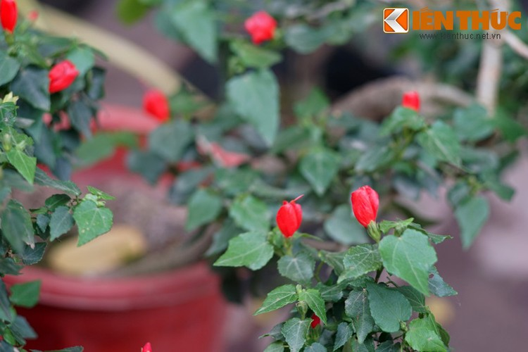 Loat cay, hoa canh do ruc dem lai may man cho ngay Tet-Hinh-12