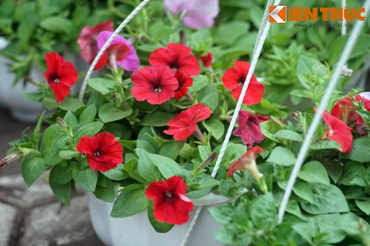 Loat cay, hoa canh do ruc dem lai may man cho ngay Tet-Hinh-14