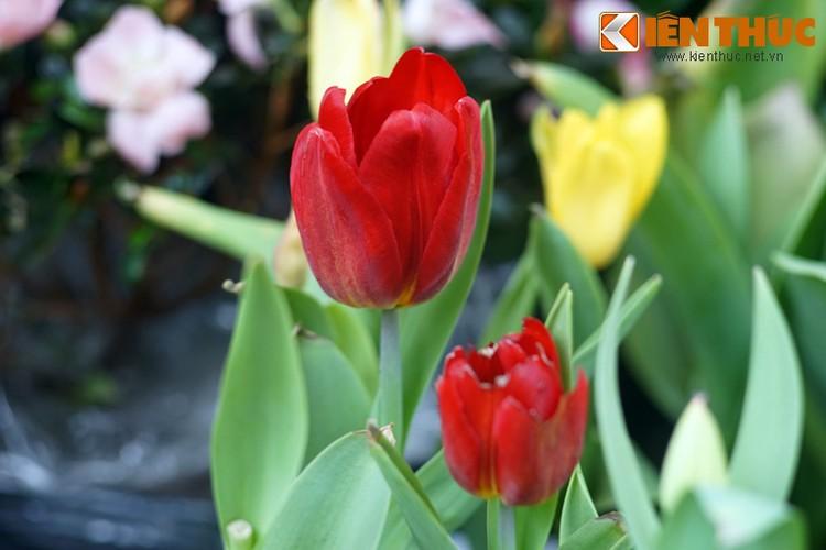 Loat cay, hoa canh do ruc dem lai may man cho ngay Tet-Hinh-15