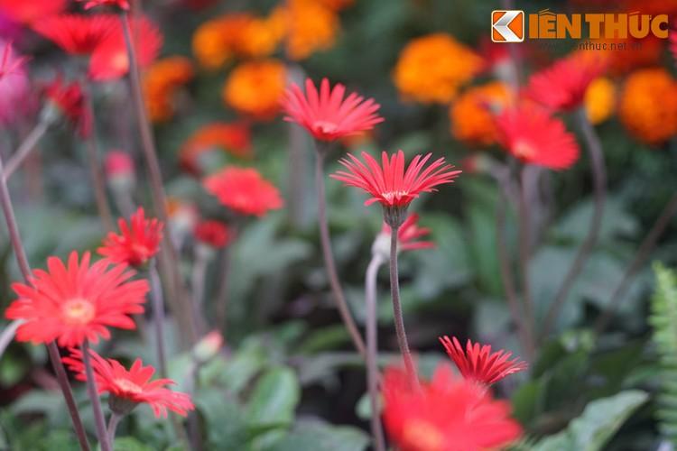 Loat cay, hoa canh do ruc dem lai may man cho ngay Tet-Hinh-2