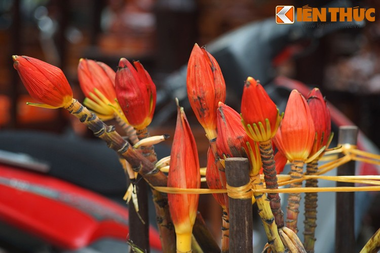 Loat cay, hoa canh do ruc dem lai may man cho ngay Tet-Hinh-21