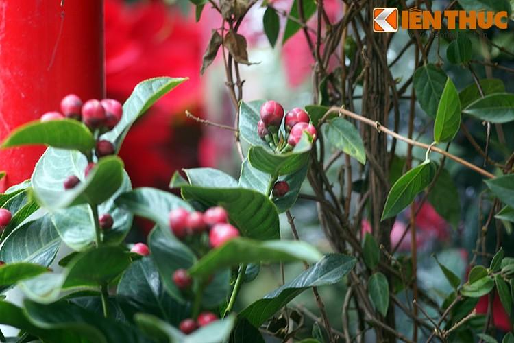 Loat cay, hoa canh do ruc dem lai may man cho ngay Tet-Hinh-22