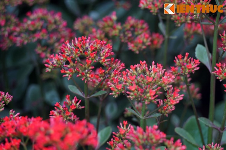 Loat cay, hoa canh do ruc dem lai may man cho ngay Tet-Hinh-4