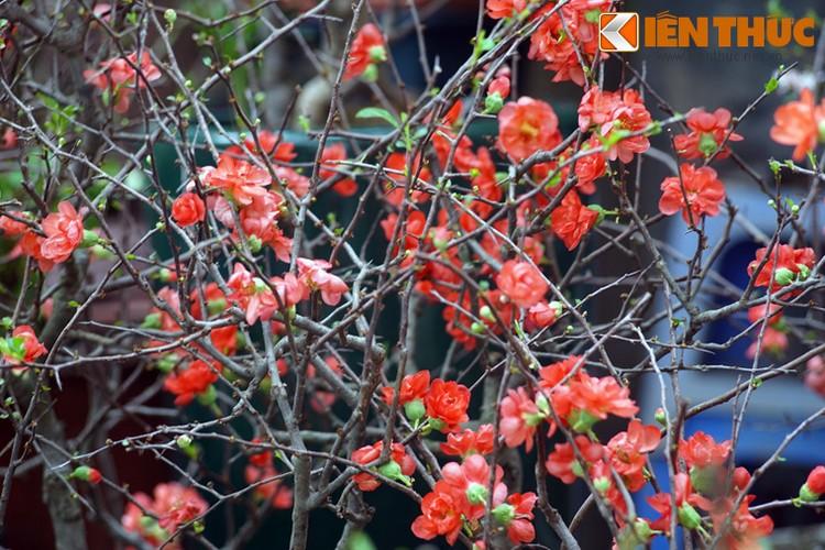 Loat cay, hoa canh do ruc dem lai may man cho ngay Tet-Hinh-5