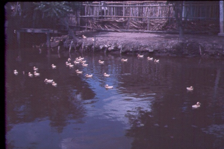 Sai Gon nam 1963 - 1964 trong anh cua Jack Waer (2)-Hinh-7