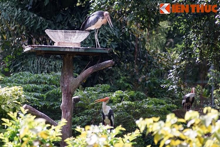 Loai chim xau xi nhat Viet Nam khien nguoi xem