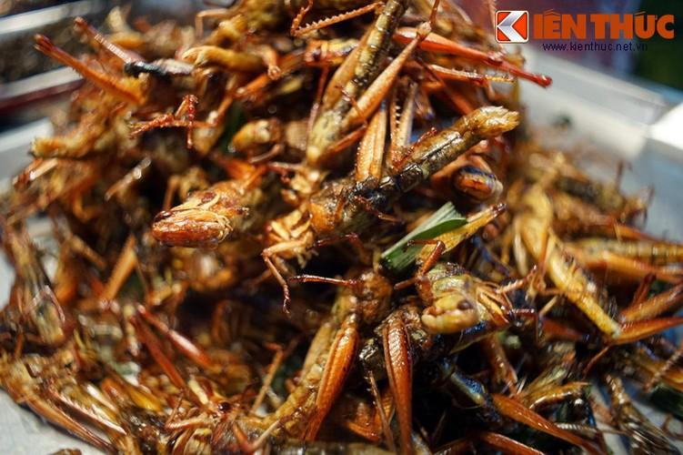 Chet khiep voi the gioi am thuc con trung o Thai Lan-Hinh-14
