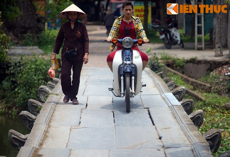 Chiem nguong cay cau da co dep nhat Bac Bo-Hinh-13