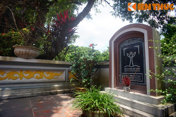 Can canh cay nhan co thu khong lo co 1-0-2 o Viet Nam-Hinh-10