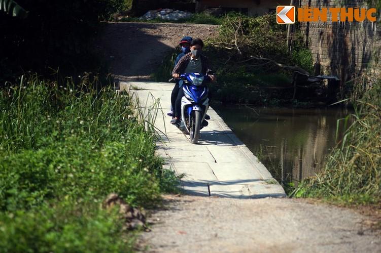 Can canh cay cau da co tuyet dep cua xu Nghe-Hinh-10