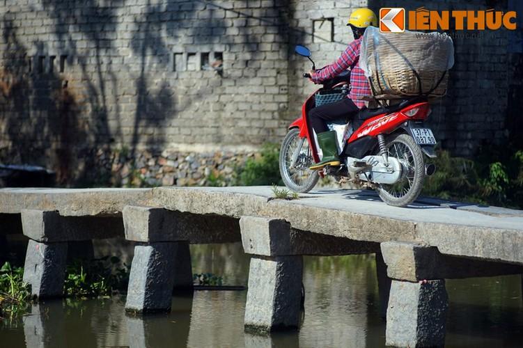Can canh cay cau da co tuyet dep cua xu Nghe-Hinh-5