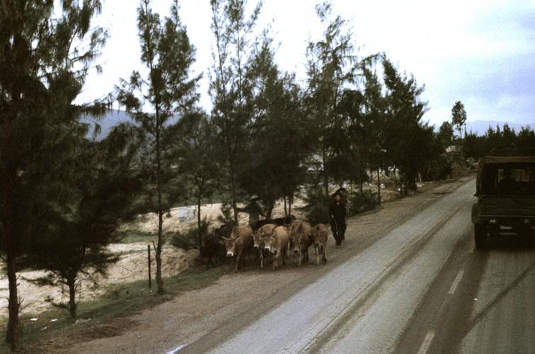 Quang Ngai nam 1967 qua ong kinh si quan phao binh My (1)-Hinh-15