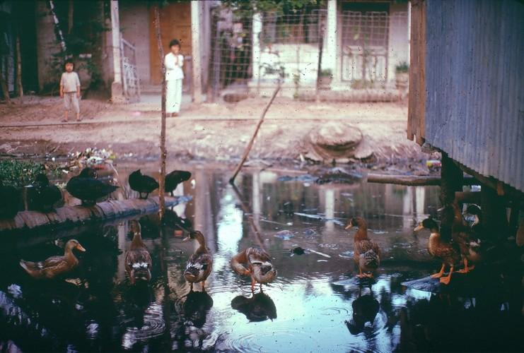 Anh doi thuong sieu song dong o Can Tho nam 1968-1969 (1)-Hinh-9