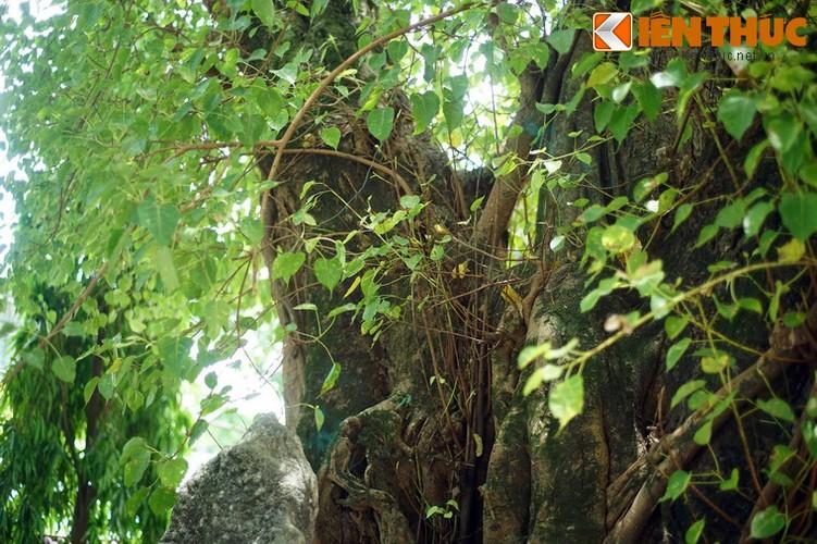 Tham coi bo de dac biet nhat Viet Nam o chua Tu Dam-Hinh-10