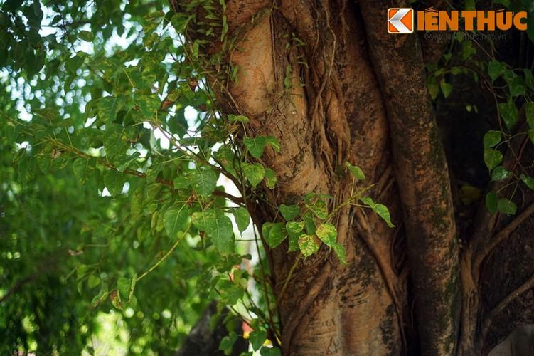 Tham coi bo de dac biet nhat Viet Nam o chua Tu Dam-Hinh-13