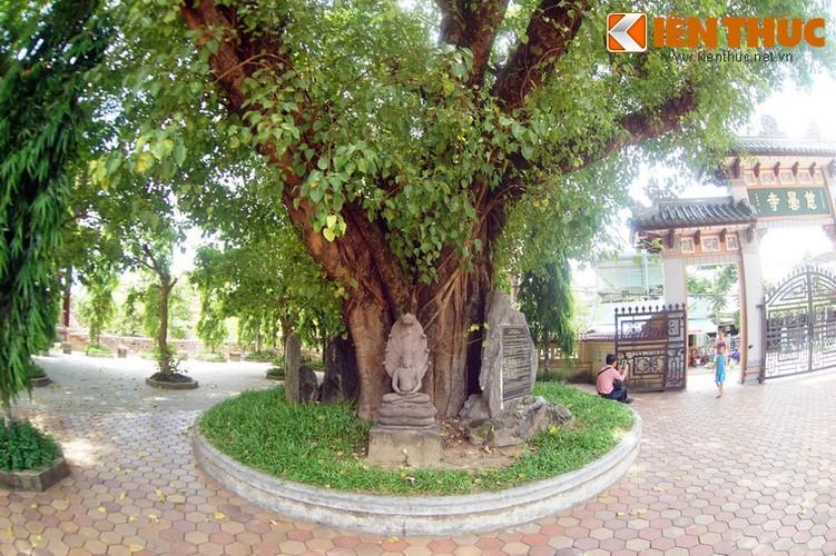 Tham coi bo de dac biet nhat Viet Nam o chua Tu Dam-Hinh-4