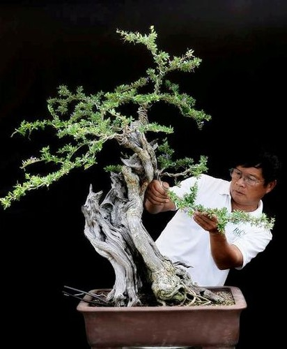 """Can canh: Lao nong Sai Gon phu phep goc """"cui"""" thanh cay canh nua ty-Hinh-5"""