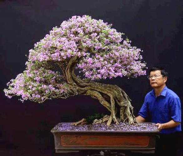 """Can canh: Lao nong Sai Gon phu phep goc """"cui"""" thanh cay canh nua ty-Hinh-7"""