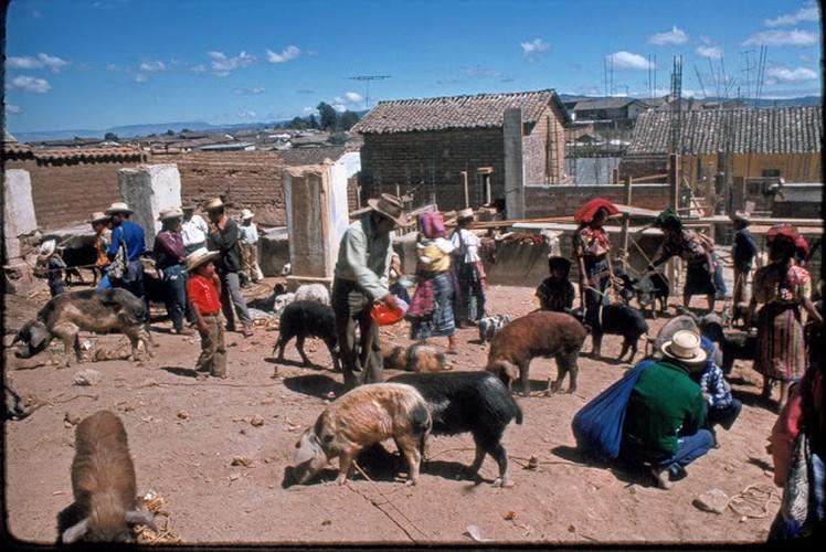 Tro lai voi dat nuoc Guatemala hoi thap nien 1970-Hinh-10