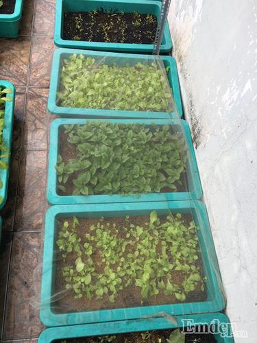 Vuon rau xanh muot tren san thuong cua me 9X Sai Gon-Hinh-10