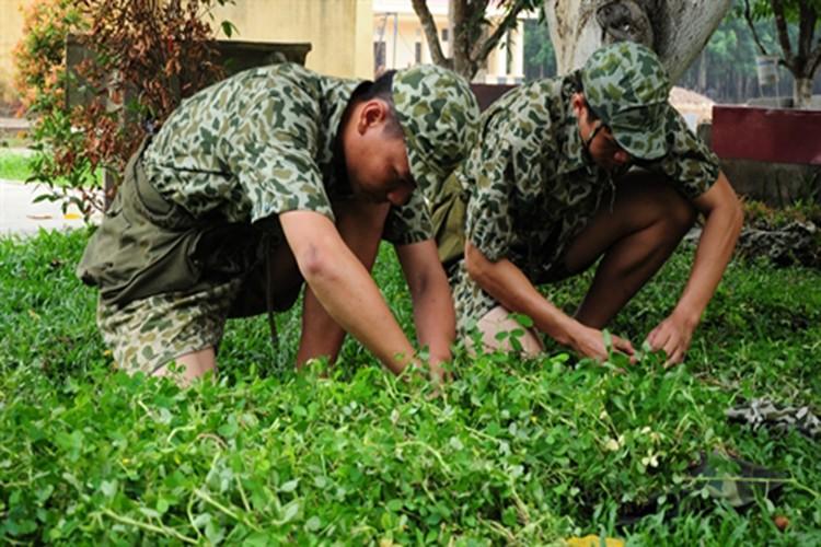 """Bat ngo """"do nghe"""" giup dac cong Viet Nam tro nen vo hinh-Hinh-10"""