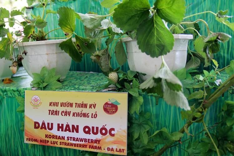 "Ngam ""hang khung"" tai le hoi trai cay Nam Bo 2017-Hinh-5"