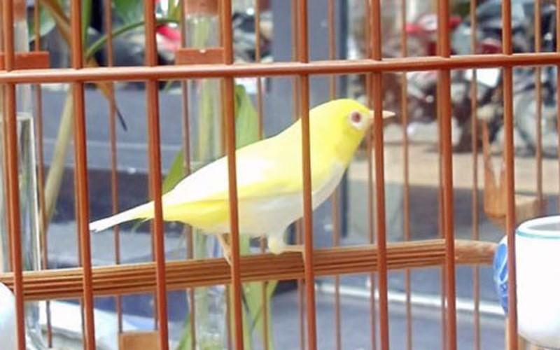 Nhung giong chim khien dai gia Viet khong ngai chi tien-Hinh-5