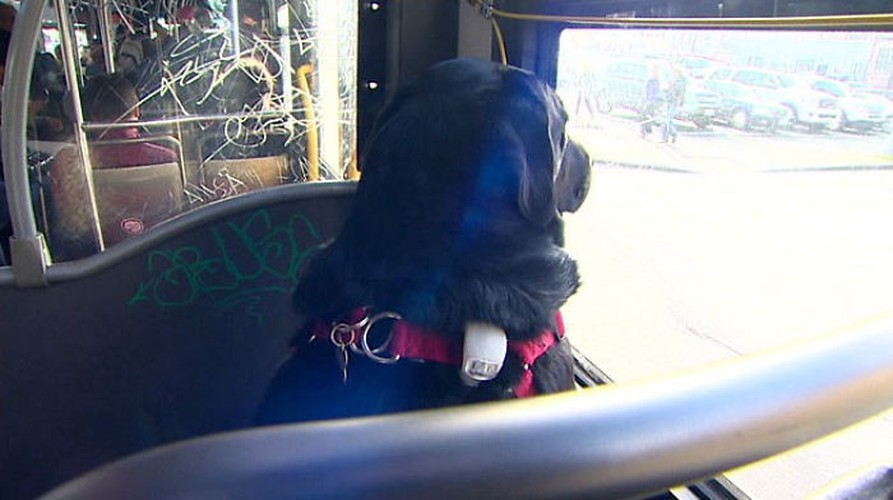 Co cho hang ngay tu di xe bus ra cong vien choi-Hinh-4