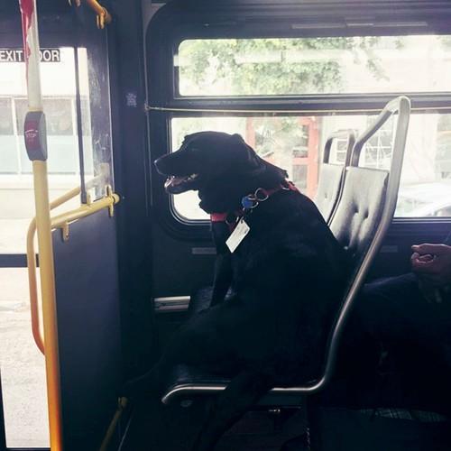 Co cho hang ngay tu di xe bus ra cong vien choi