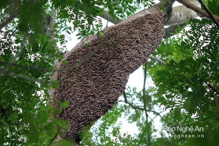 Can canh cach san ong rung lay mat ban gia dat do-Hinh-2