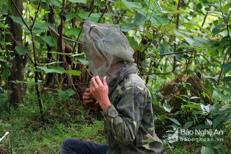 Can canh cach san ong rung lay mat ban gia dat do-Hinh-4