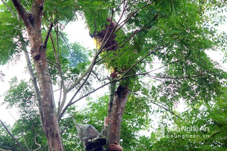 Can canh cach san ong rung lay mat ban gia dat do-Hinh-7