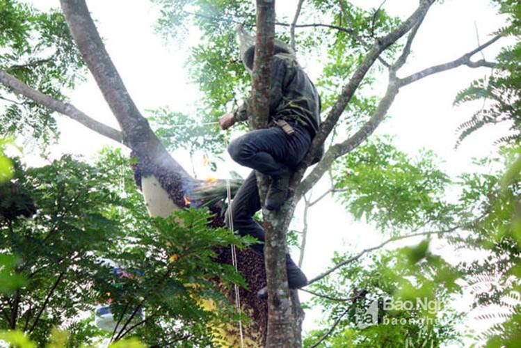 Can canh cach san ong rung lay mat ban gia dat do-Hinh-8