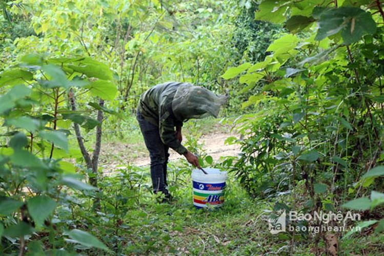 Can canh cach san ong rung lay mat ban gia dat do-Hinh-9