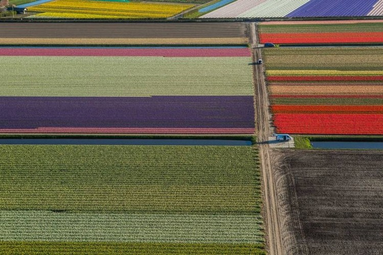 Dep vo cung nhung canh dong hoa tulip nhin tu tren cao-Hinh-3