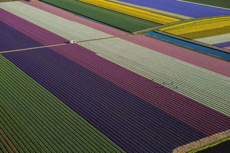 Dep vo cung nhung canh dong hoa tulip nhin tu tren cao-Hinh-4