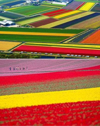 Dep vo cung nhung canh dong hoa tulip nhin tu tren cao
